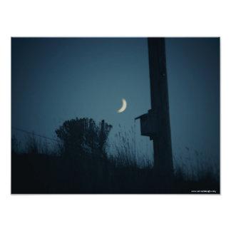 Bluebird de las buenas noches cojinete