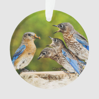 Bluebird del este