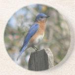 Bluebird del este masculino posavasos manualidades