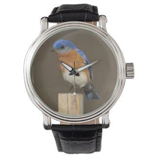 Bluebird del este reloj de mano