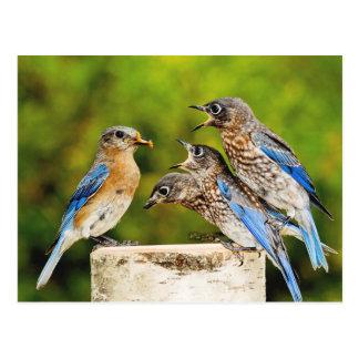 Bluebird del este postal