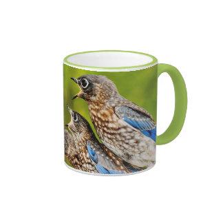 Bluebird del este taza a dos colores
