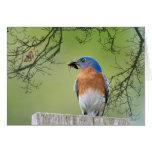 Bluebird del papá tarjeton