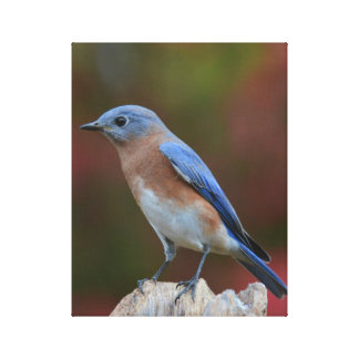 Bluebird Fine Art Canvas Print