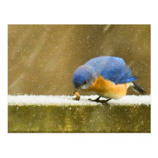 Bluebird hambriento en la nieve tarjeta postal