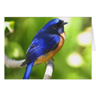 Bluebird Happiness Card