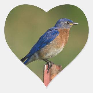 Bluebird Heart Sticker