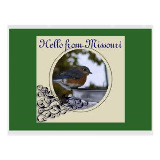 Bluebird Hello from Missouri Postcards
