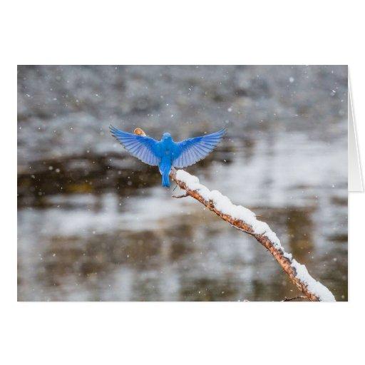 Bluebird hermoso tarjeta pequeña