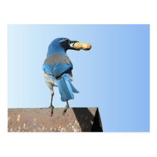 Bluebird hermoso tarjeta postal