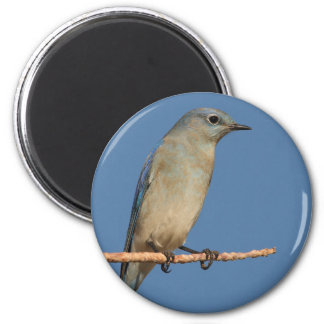 bluebird imán de frigorífico