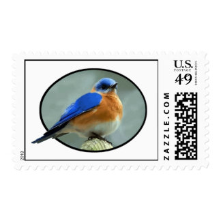Bluebird in Oval Frame Stamp