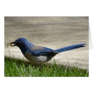 Bluebird in Spring Card