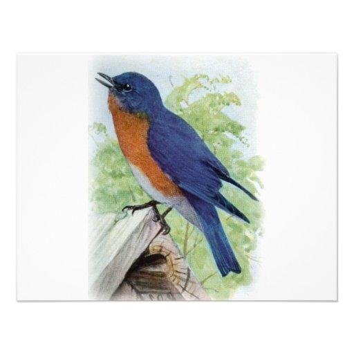 Bluebird Invitación Personalizada