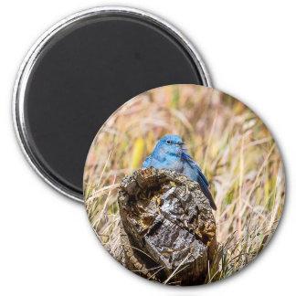 Bluebird Magnet