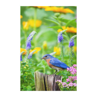 Bluebird male on fence post in flower garden canvas print