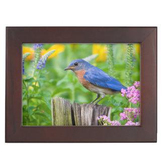 Bluebird male on fence post in flower garden keepsake box