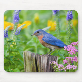 Bluebird male on fence post in flower garden mouse pad