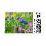 Bluebird male on fence post in flower garden postage