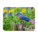 Bluebird male on fence post in flower garden rectangular photo magnet