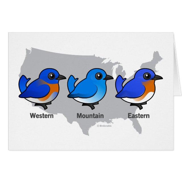 Birdorable bluebird map greeting card cute bird gifts greeting card this cute original design from birdorable features three of north americas bluebird species western bluebird mountain bluebird m4hsunfo