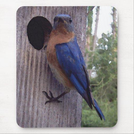 Bluebird Nest Box Mousepad