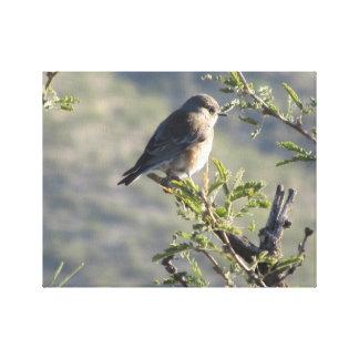 Bluebird occidental en árbol del Mesquite Impresion En Lona