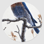 Bluebird occidental pegatinas redondas