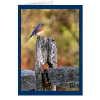 Bluebird of Happiness ~ Art Mooney Cards