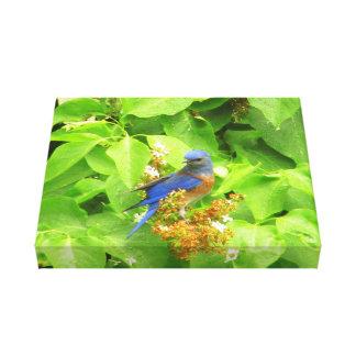 Bluebird on Lilac Hedge Canvas Print