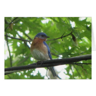 Bluebird On Wire Card