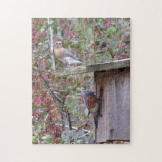 Bluebird Pair in Spring Jigsaw Puzzle