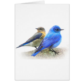 bluebird pair, male and female mountain bluebirds greeting cards