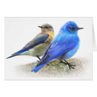 bluebird pair, male and female mountain bluebirds cards