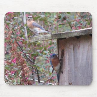 Bluebird Pair Mousepad