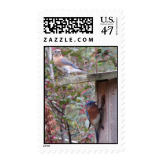 Bluebird Pair Postage