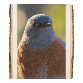 Bluebird panel
