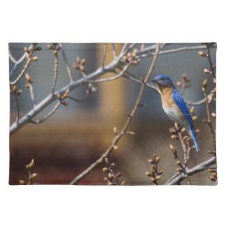 Bluebird Placemat de la jerarquización Manteles