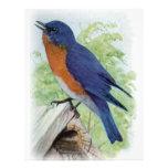 Bluebird Plantilla De Membrete