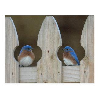 Bluebird postcards