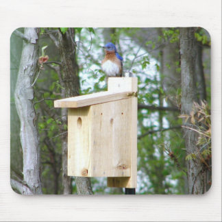Bluebird Ruffled Feathers Mouse Pad