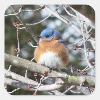 Bluebird Square Sticker