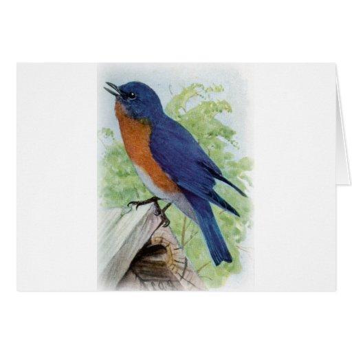 Bluebird Tarjeta
