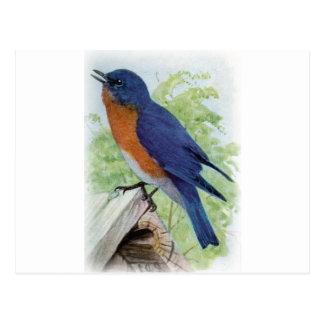 Bluebird Tarjetas Postales