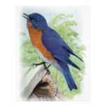 Bluebird Tarjeta Publicitaria