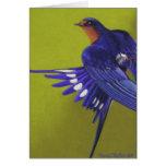 Bluebird, trago de granero felicitacion