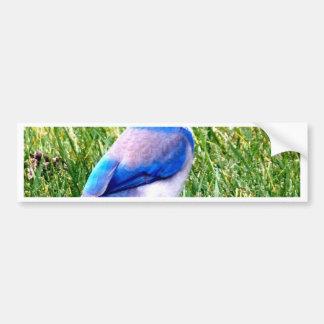 bluebird waiting for true love bumper sticker