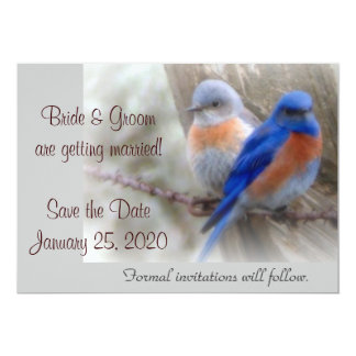 Bluebird Wedding Announcements