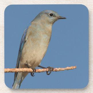 bluebird y cielo azul posavasos de bebidas