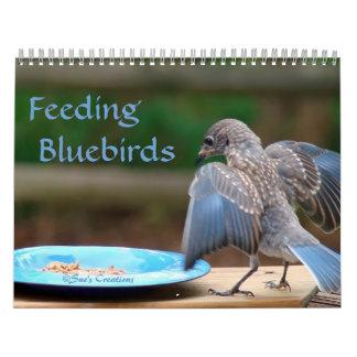 Bluebirds de alimentación calendario